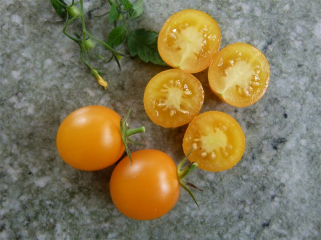Bolivian Yellow Tomato seeds